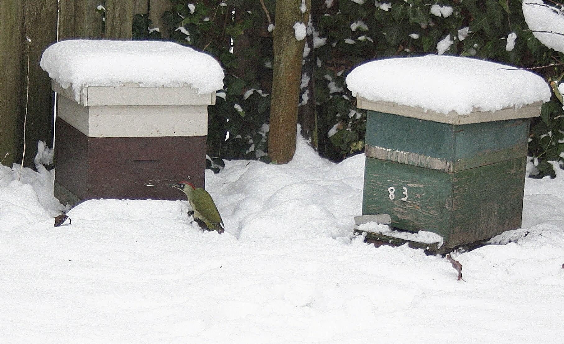 Bijenkast in de winter
