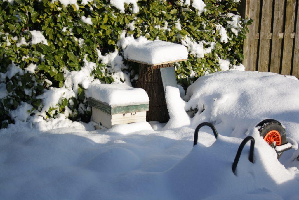 bijenvolk sneeuw
