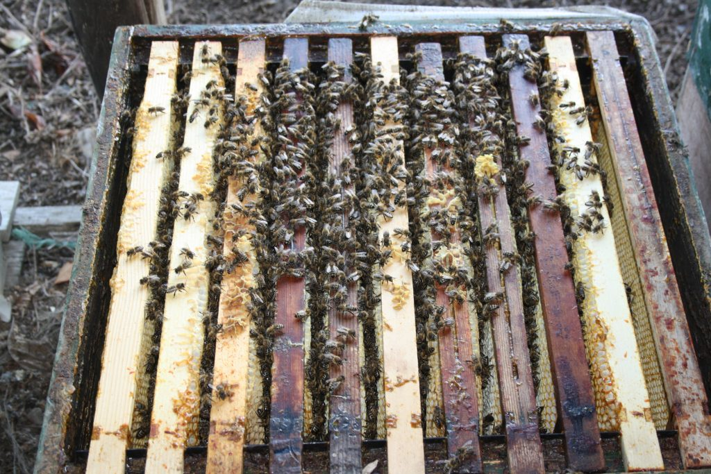 bijen winter