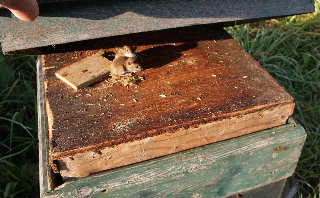 bijenkast muis